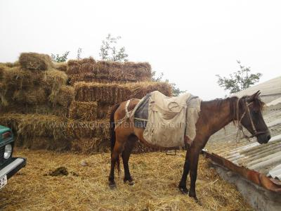 Armenian horse at the village